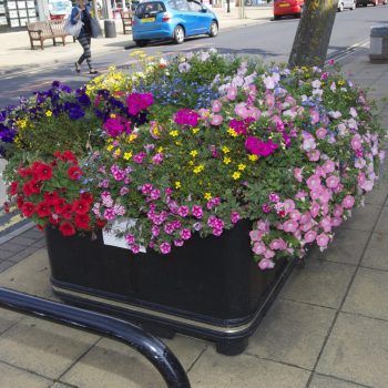 Formby Village flowers